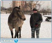 http://i53.fastpic.ru/big/2013/0405/8c/5cb610cc16f4cbd562ea7f1bfa30a68c.jpg