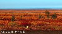 Полярные медведи / Polar Bears: A Summer Odyssey (2012) HDRip