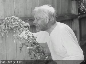 Тимур и его команда / Клятва Тимура (1940) DVD5 + DVDRip