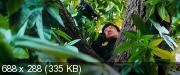������� ���� 3: ������ ������ / Chinese Zodiac (2012) DVDScr