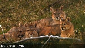 Пума! / Puma! (2012) HDTV 1080i + HDTV 720p