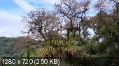 http://i53.fastpic.ru/thumb/2013/0411/94/e9dcf0112e86211af3c361cc7c368b94.jpeg